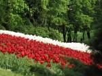 fiori,amore,latte,sangue,poesia giapponese,haiku