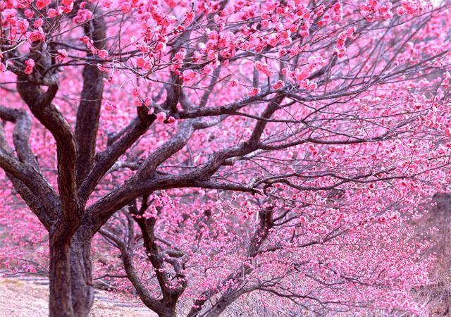 alberi fioriti disordine ordinato