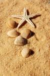 sabbia, mare, conchiglie, ricerca