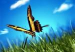 haiku, farfalla, primavera, prato,volare,viaggio