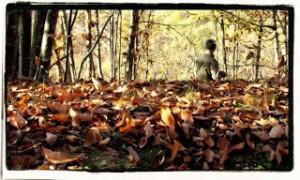 Autunno le foglie