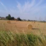 Il giallo-oro in onore di Van Gogh...le cicale..si sentono...