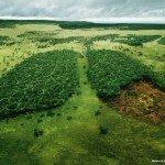 WWF-Amazzonia