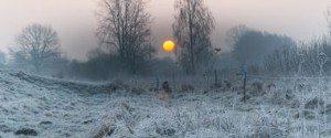 inverno-nei-campi-e-nei-prati-51461158